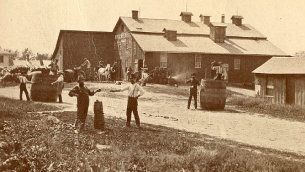 John Haas became a partner in the Ripon City Beer Brewery in 1865 - later known as Haas Brewery. This photo taken in the late 1800s. All buildings except stable barn have been razed.